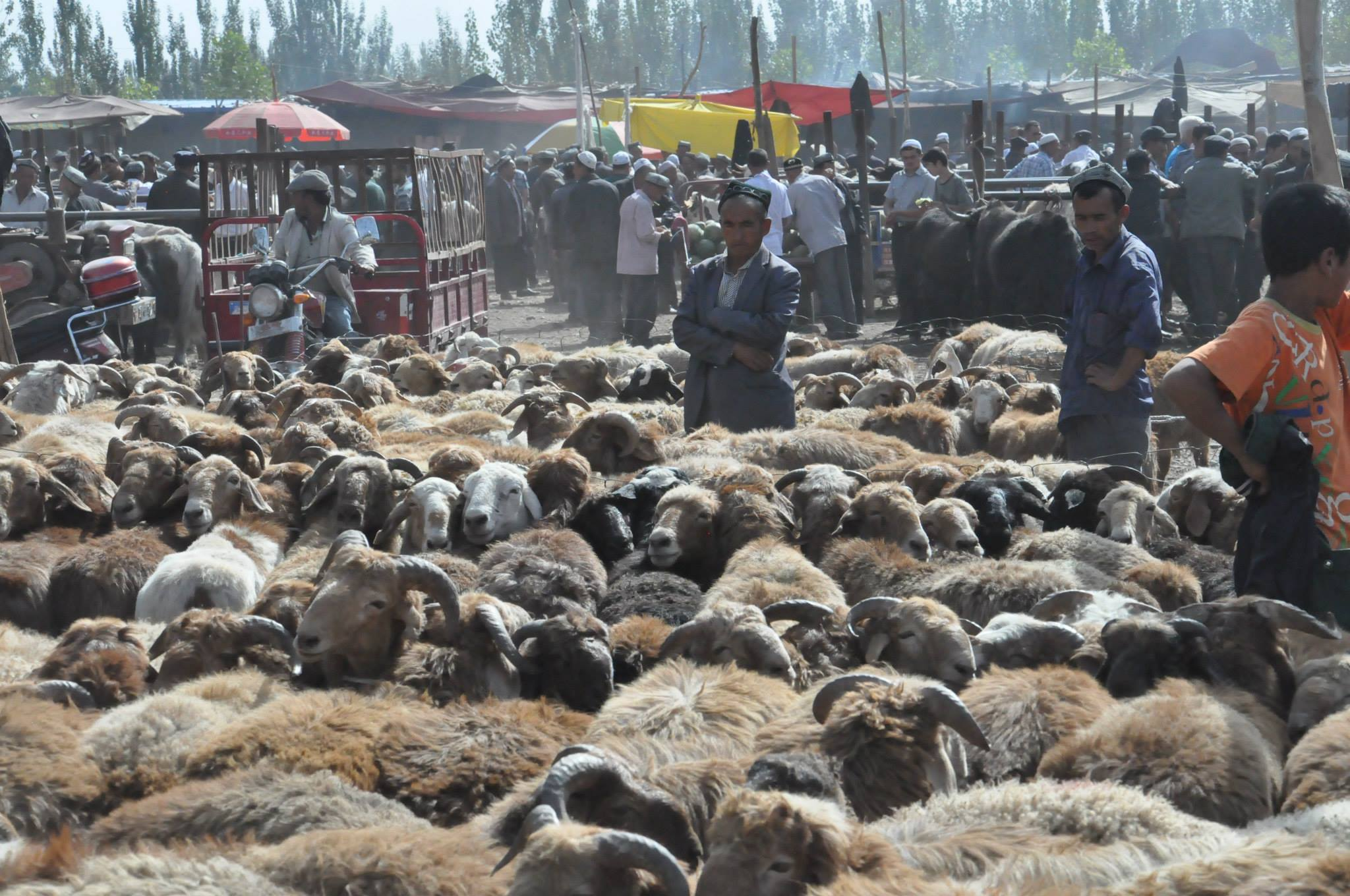 jg-silk-road-photo-cattle-market